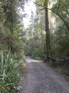 Walking though the  Huon Valley & Tahune Forest Hobart, Tasmania, Australia April 15, 2015, ©Ruth Jewell