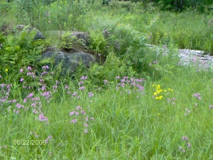 Vermont Meadow, June 22, 2006